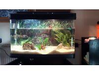 120 Liters fish tank