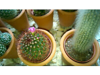WANTED- Any CACTI /PLANTS/ Flower Pots