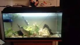 100l tropical fish tank