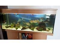 5 foot 400L fish tank