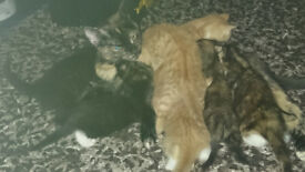 Introducing Lucky's Kitten's, the Magnificent Seven