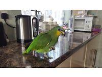 Missing Green Parrot