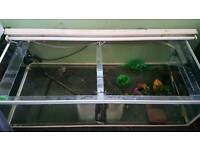 Large Fish Tank with light, heater and filter