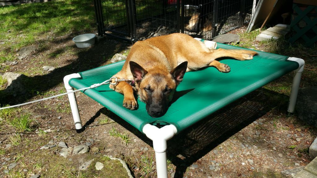 """Raised PVC Pipe Dog Bed Cot 32""""x44""""x8"""" 11 Colors Mildew and"""