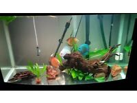 Aqua One 3ft fish tank