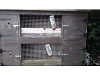 Double Decker Ferret hutch