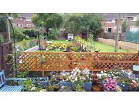 2 bed ground floor looking for a 1 bed with own garden