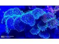 Marine green flourscent mushrooms