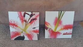 2 pink lilly pictures