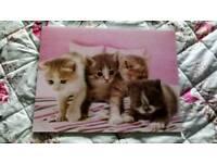 3D Cute Cat Picture