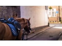 Full-time Horse Riding Instructor at HYDE PARK STABLES LONDON