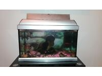 fish tank with 4 fishes