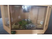 Ghost pastel royal python and vivarium £280 ono