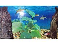 Aquarium. Fish tank for sale.