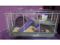 2 year old hamster and cage