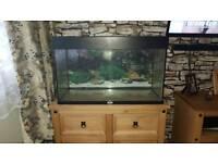 125l Juwel fish tank