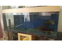 6 FOOT FISH TANK WITH HUGE FISHES