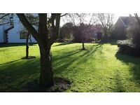 T Beevor Garden Maintenance | Regular Maintenance, Mowing, Hedge Cutting, Soft Landscaping