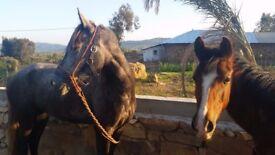 Moroccan Stone Farm *** Newly renovated*** north morocco
