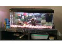 Fish, 90l tank and full set up for sale