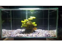 Fluval Edge 23 litre aquairum for sale with all accessories inc. filter, day/night light, hose etc.