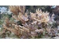 kenya tree coral marine reef