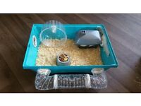 Dwarf Hamster, Cage and Accessories For Sale!!