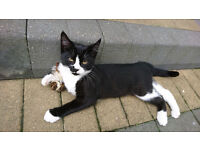 Lovely 5 months old kitten ready to go to loving home