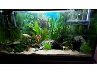220L Tropical Fish Tank, solid wooden unit and accessories