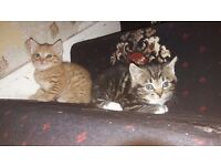 West London Kittens For Sale!