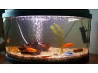 Aquarium + 3 goldfish