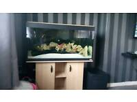 Fluval roma 200 tank stand and fish fir sale