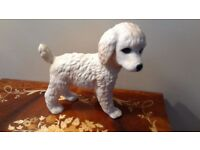 Lennox Breed Puppy Collection: Poodle