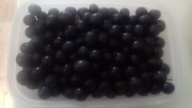 350g Fresh Picked Sloes