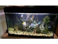 Fluval tropical fish tank & fish