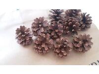 10 Small Pine Cones
