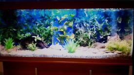 Fish Tank Aquarium & Cabinet & Accessories. Open to offers
