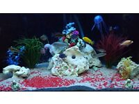 Fish tank 300ltr ( aquarium )