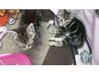 Gorgeous kittens ready now