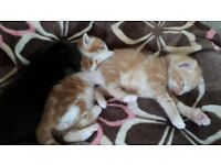 Three beautiful kittens for sale