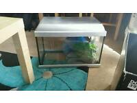 Fish tank with everything