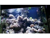 Reef aqarium for sale
