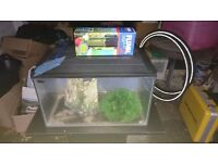 Small Fish tank with stand includes pump and ornaments