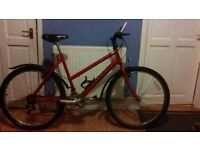 Raleigh max mauntain bike for sale