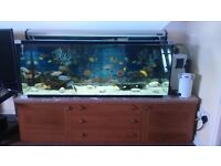4 ft malawi tank full setup (GRAB A BARGAIN NEED GONE ASAP!!!!!!!!!!!!!!)
