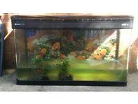 300lt fish tank