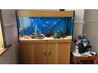 Aquarium 3ft and Stand Aqua One , heater , filter , pump, gravel , ornaments