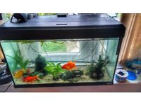 Fish Tank (incl. two pumps, plants and ornaments)