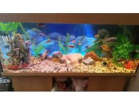 4ft tropical cichlid tank and stand