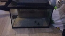 Large fish tank with filter